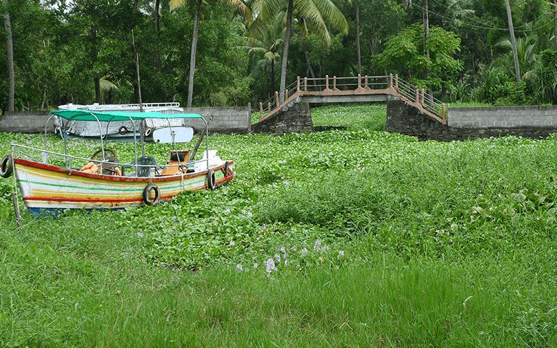 Befreiung der Wasserwege von der Plage des Wasserunkrauts