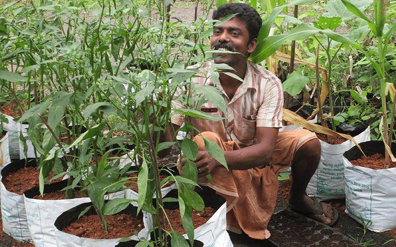 Grow Bags – Pflanzenprojekt