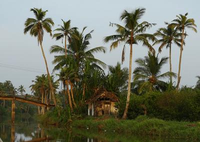 Palmen am Fluss